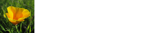 Gregory Lewis Landscape Architect